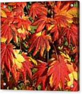 Autumn Leaves 08 Acrylic Print