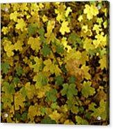 Autumn Leaves 091 Acrylic Print