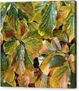 Autumn Leaves 79 Acrylic Print