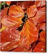 Autumn Leaves 80 Acrylic Print
