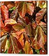 Autumn Leaves 81 Acrylic Print