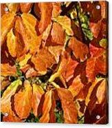 Autumn Leaves 82 Acrylic Print