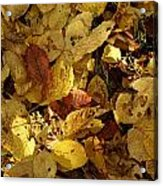 Autumn Leaves 94 Acrylic Print