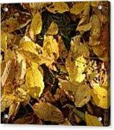 Autumn Leaves 95 Acrylic Print