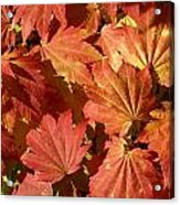 Autumn Leaves 98 Acrylic Print
