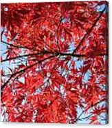 Autumn Leaves And Blue Sky Acrylic Print