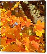 Autumn Leaves Art Print Yellow Orange Acrylic Print