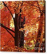 Autumn Leaves Acrylic Print by Carol Groenen