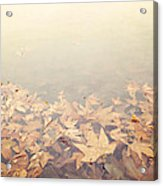 Autumn Leaves Floating In The Fog Acrylic Print
