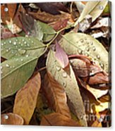 Autumn Leaves Acrylic Print by  Marcus Maiden