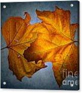 Autumn Leaves On Blue Acrylic Print