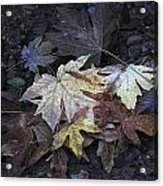 Autumn Leaves Submerged In Pescadero Creek Acrylic Print