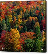 Autumn Leaves Vermont Usa Acrylic Print