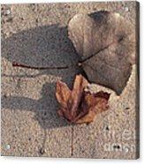 Autumn Leftovers  Acrylic Print