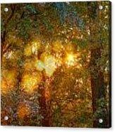 Autumn Light Symphony Acrylic Print