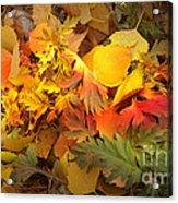 Autumn Masquerade Acrylic Print by Martin Howard