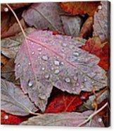 Autumn Melange Acrylic Print