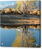 Autumn Mirrored Acrylic Print
