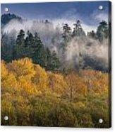 Autumn Mists Acrylic Print