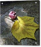 Autumn Moment Acrylic Print