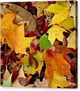 Autumn Moods 19 Acrylic Print