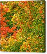 Autumn Mosaic Nj Acrylic Print