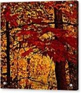 Autumn Mosiac  Acrylic Print by Dianne  Lacourciere