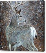 Autumn Muley Acrylic Print