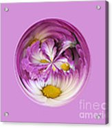 Autumn Mum Orb Abstract Acrylic Print
