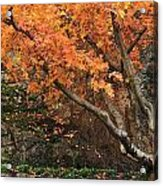 Autumn Of My Life Acrylic Print