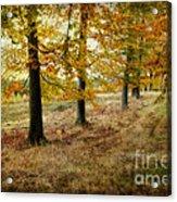Autumn On Cannock Chase Acrylic Print
