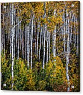 Autumn On Mcclure Pass Acrylic Print