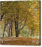 autumn on Moenchsberg in Salzburg Acrylic Print