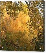 Autumn On The Bosque Acrylic Print