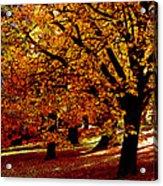 Autumn On Wombat Hill II Acrylic Print