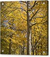 Autumn Orange Forest Colors At Hager Park No.1189 Acrylic Print