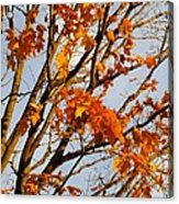 Autumn Orange Acrylic Print by Guy Ricketts