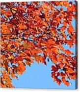 Autumn Orange Acrylic Print