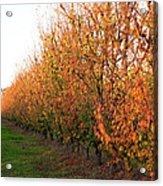 Autumn Orchard Acrylic Print