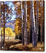 Autumn Paint Chama New Mexico Acrylic Print