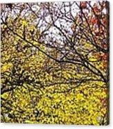 Autumn Panorama Acrylic Print