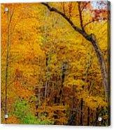 Autumn Peak Colors Acrylic Print