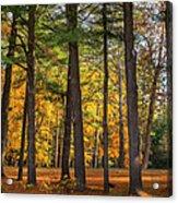 Autumn Pines Square Acrylic Print