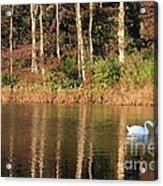 Autumn Pond Sunset With Swan Acrylic Print