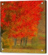 Autumn Popping Acrylic Print