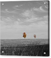 Autumn Prairie Trees Acrylic Print