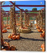 Autumn Pumpkin Patch Acrylic Print by Joann Vitali
