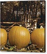 Autumn Pumpkins Acrylic Print by Amanda Elwell
