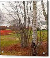 Autumn Red Field Maine  Acrylic Print