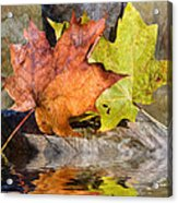 Autumn Reflection Acrylic Print